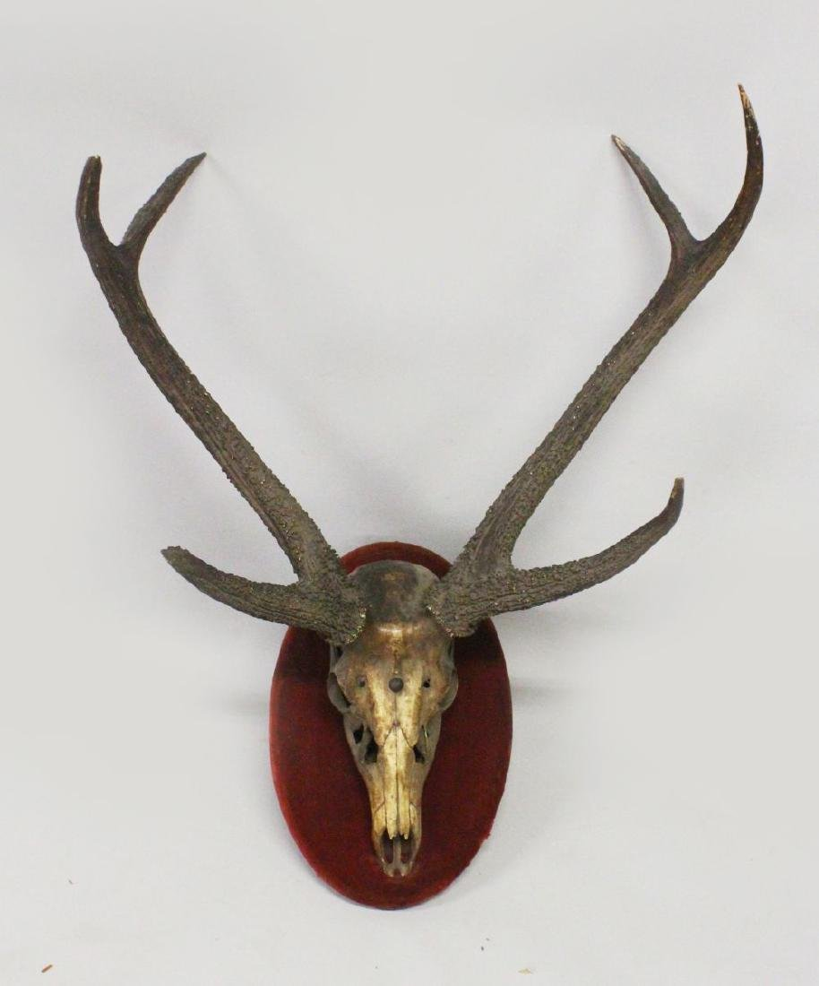 AN IMPRESSIVE SET OF RED STAG ANTLERS, WITH SKULL,