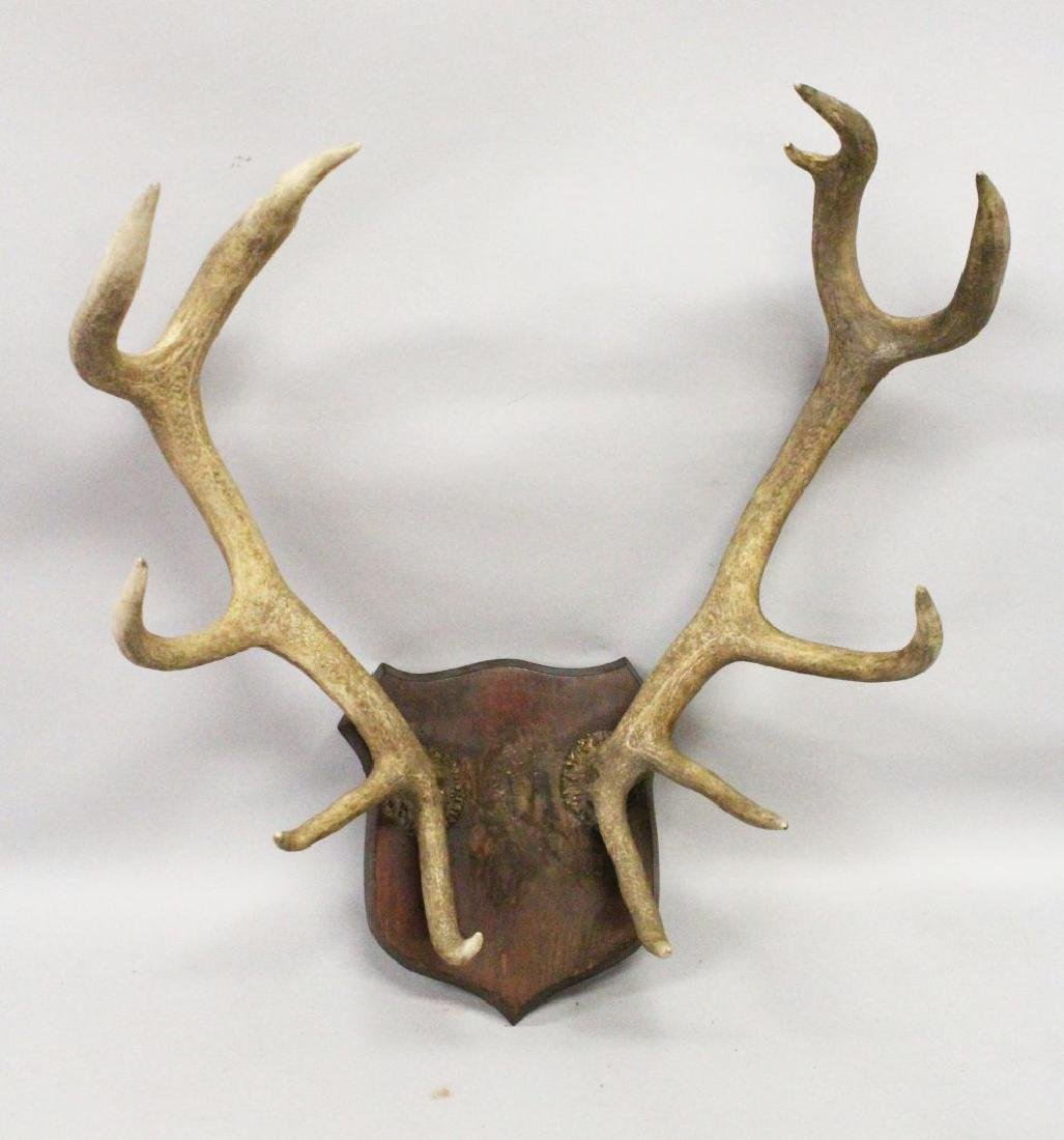"AN IMPRESSIVE PAIR OF ""ELEVEN POINT"" DEER ANTLERS,"