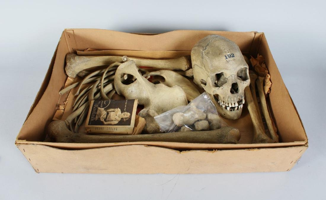 A PART HUMAN SKELETON WITH ARTICULATED SKULL, stamped
