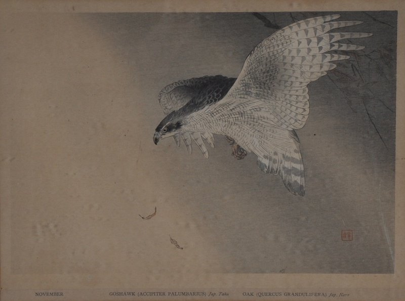 20th Century Japanese School. 'Goshawk' (Accipiter