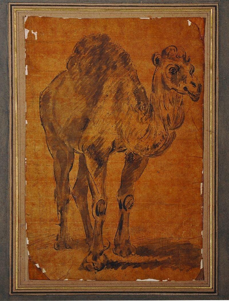 19th Century English School. Study of a Camel,