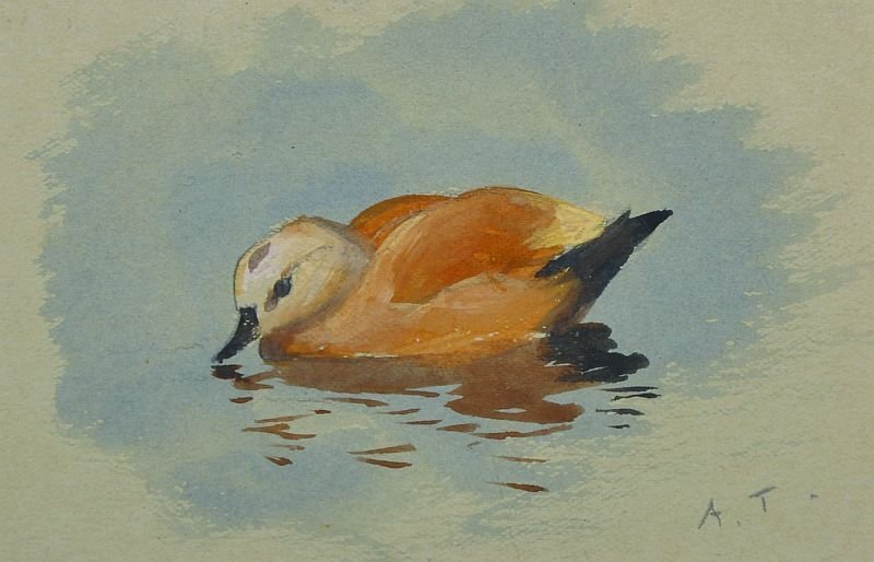 Archibald Thorburn (1860-1935) British. A Duck in the