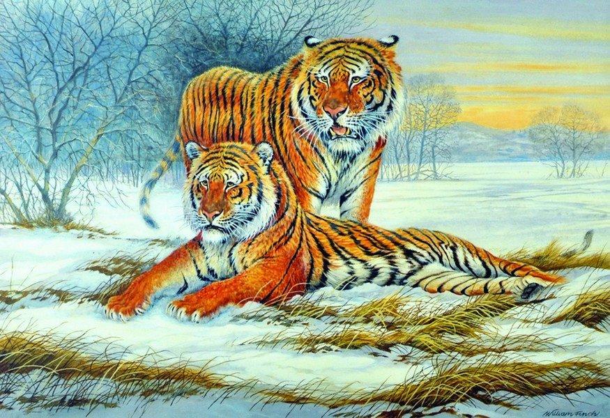 William Finch (20th Century) British. Tigers in a