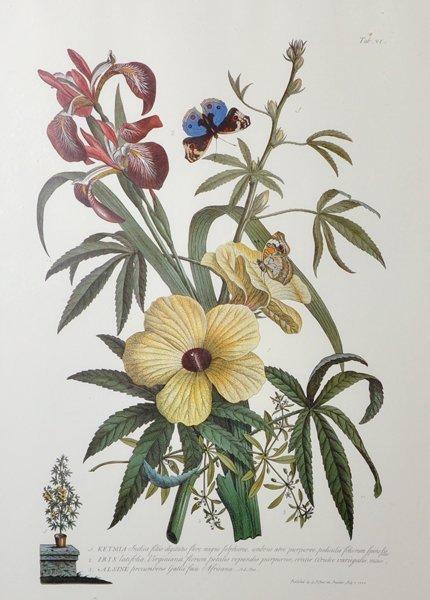After Georg Dionysius Ehret (1710-1770) German.