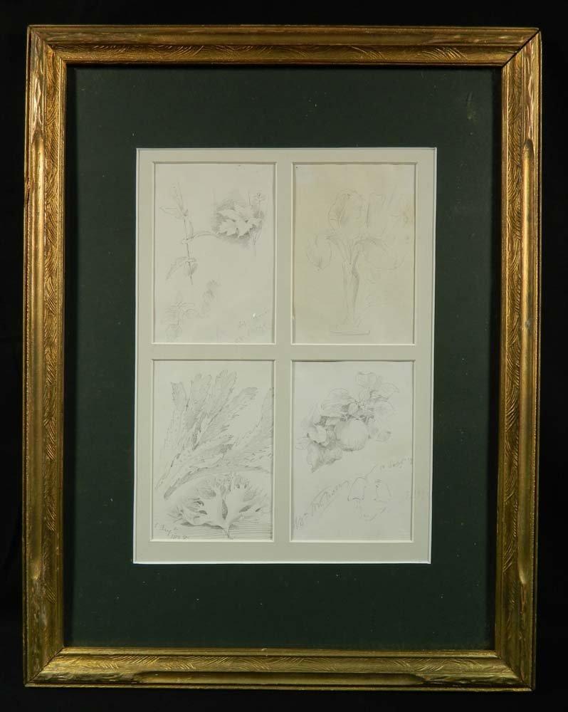 William Merritt Chase 4 Drawings Botanical