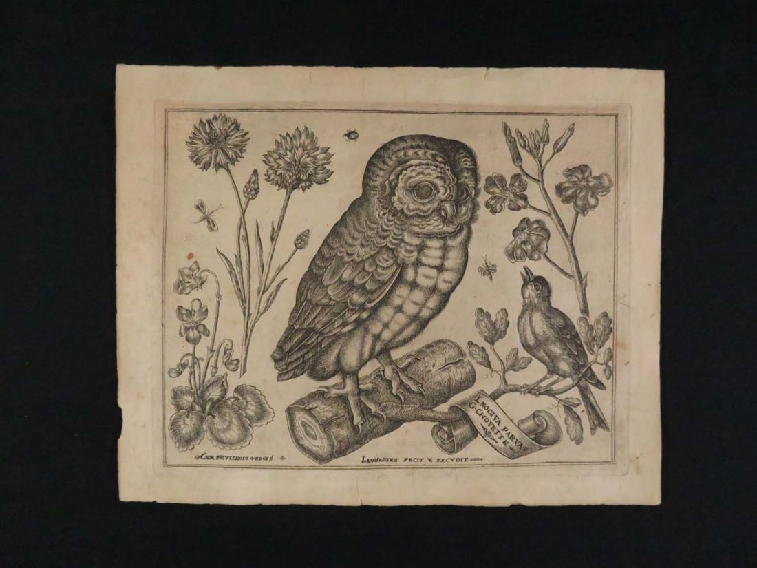 Langlois Old Master Engraving Ornothological Owl and