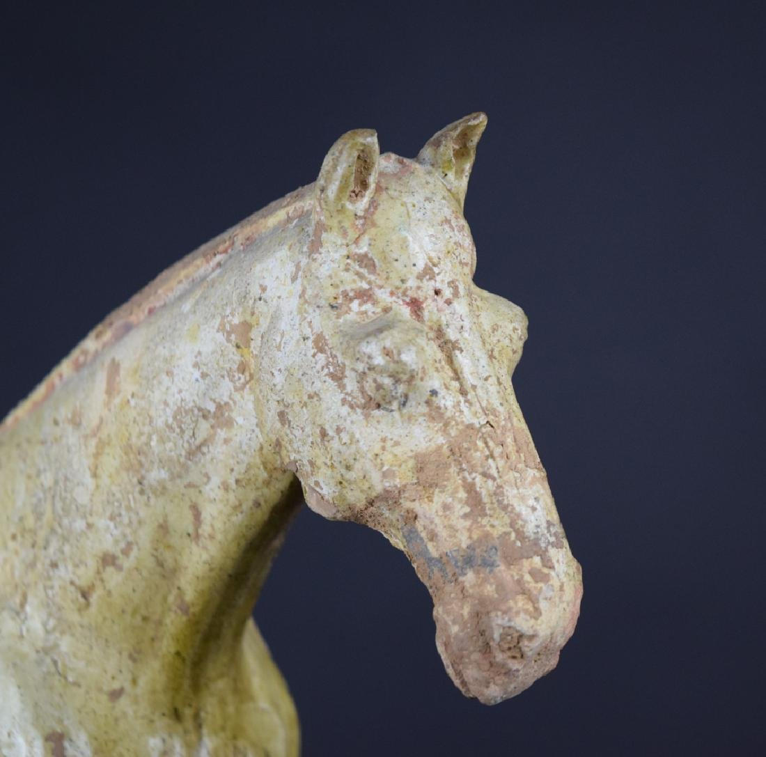 Chinese Tang or Liao dynasty celadon pottery horse - 4
