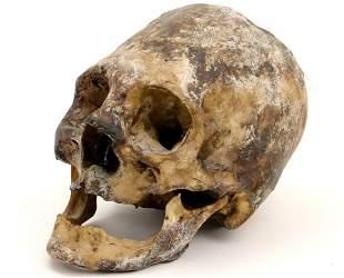 Rare Museum Display of Indonesian Dayak Headhunter