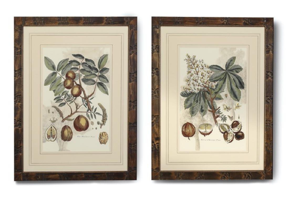 (2) 19th c. English hand colored botanical engravings