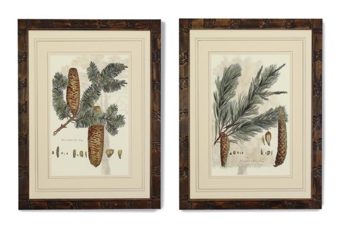 (2) 19th c. English hand colored botanical engravings