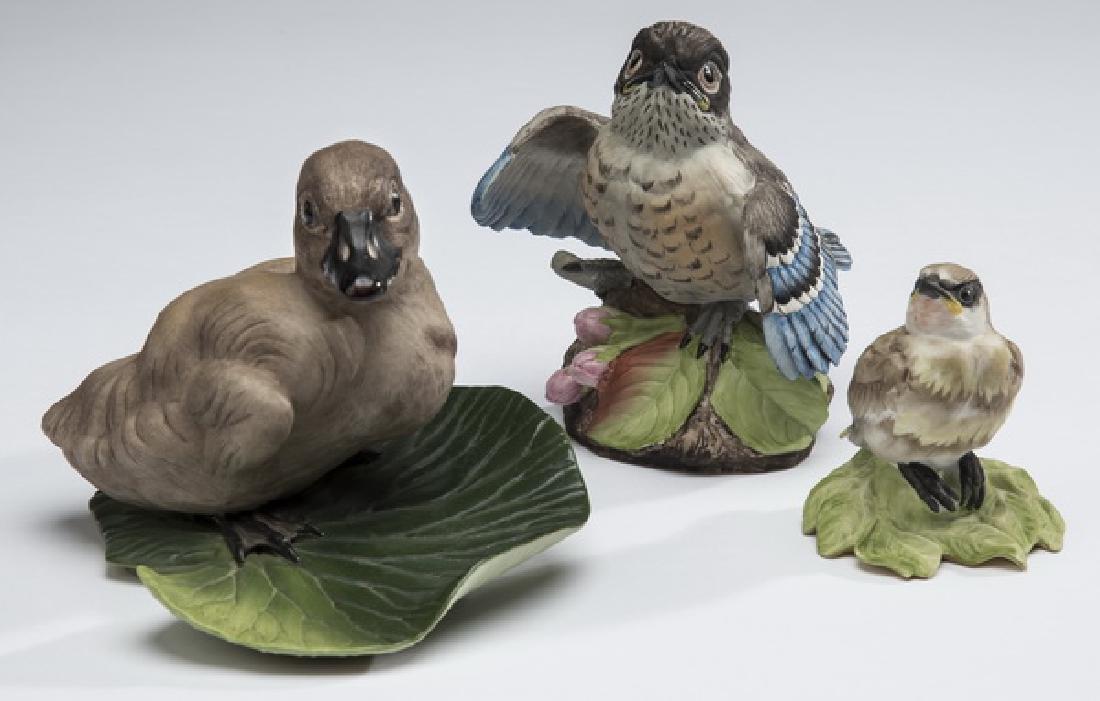 Boehm cedar waxwing, fledgling bluebird, & cygnet