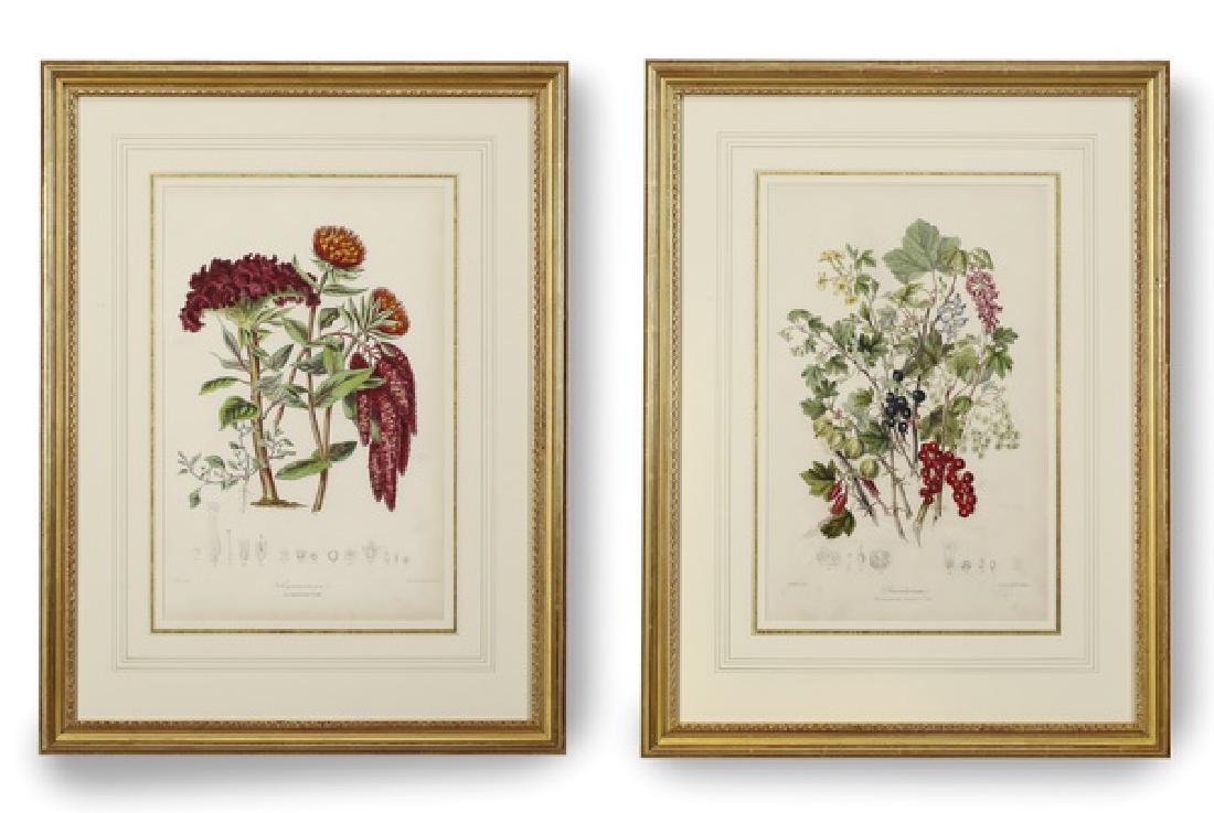 (2) 19th c.English hand colored botanical engravings