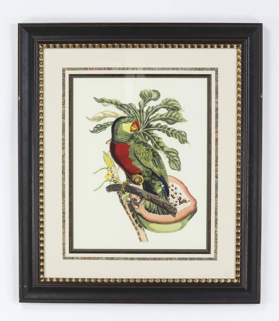 (2) Contemporary tropical bird and botanical prints - 2