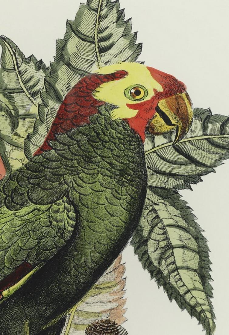(2) Contemporary tropical bird and botanical prints - 5