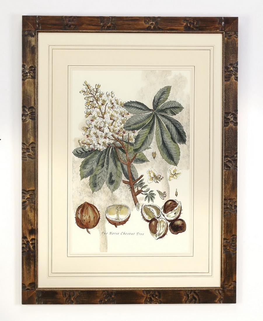 (2) 19th c. English hand colored botanical engravings - 2