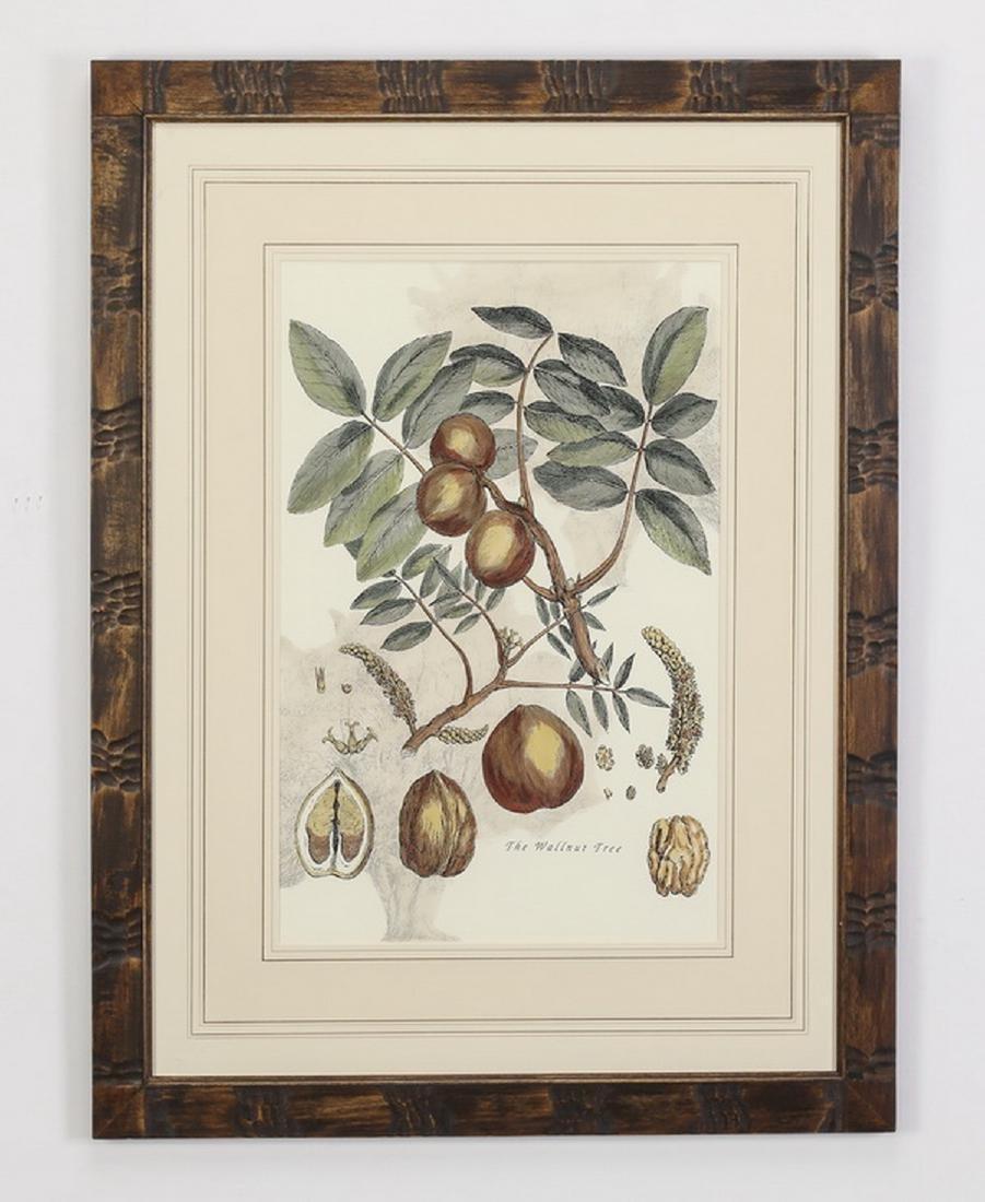 (2) 19th c. English hand colored botanical engravings - 3