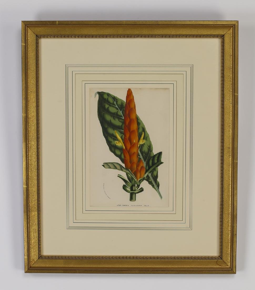 (6) 19th c. Belgian botanical lithographs - 5