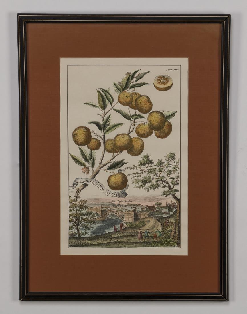 (5) 19th c. hand colored engravings, matted & framed