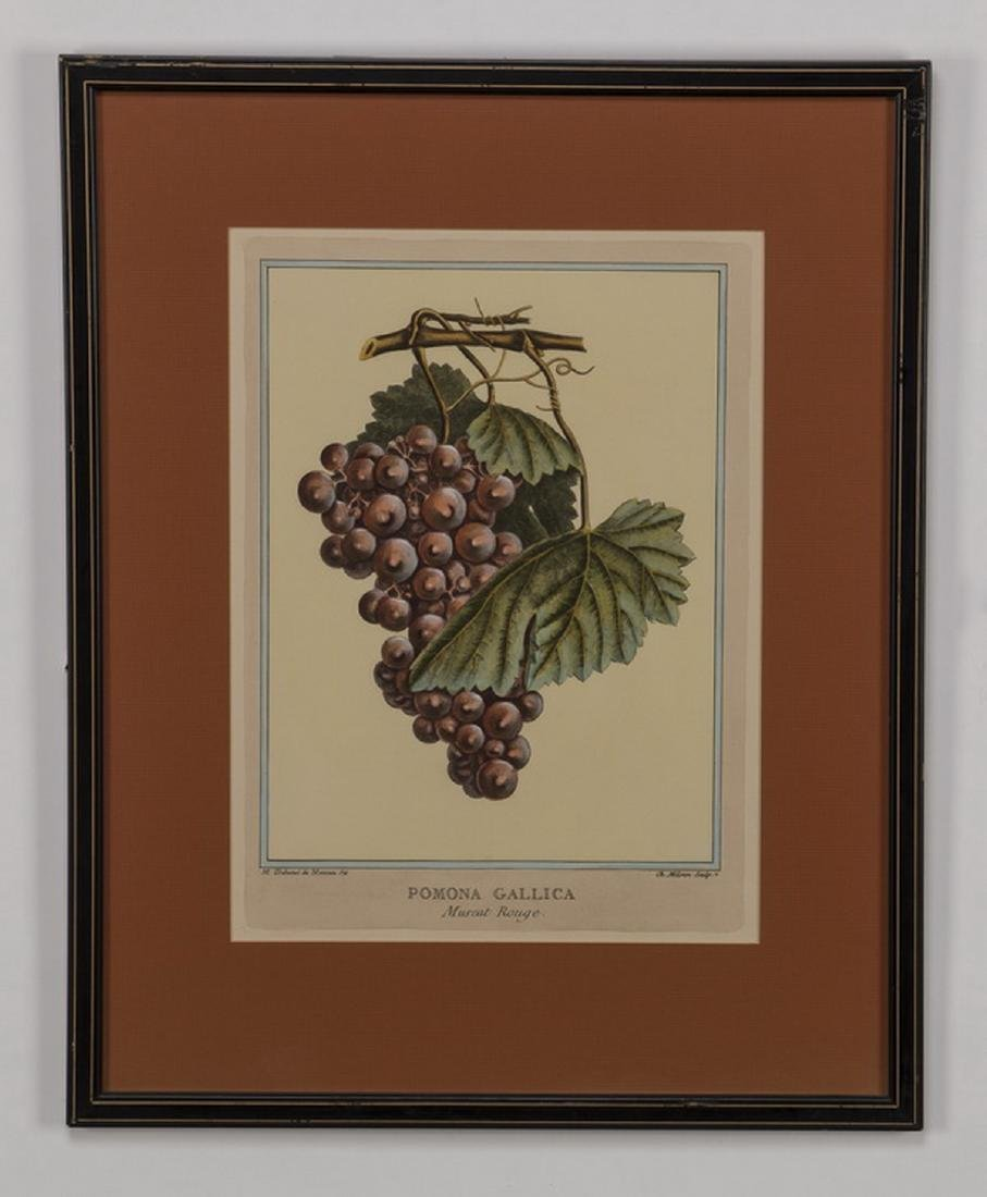(5) 19th c. hand colored engravings, matted & framed - 3