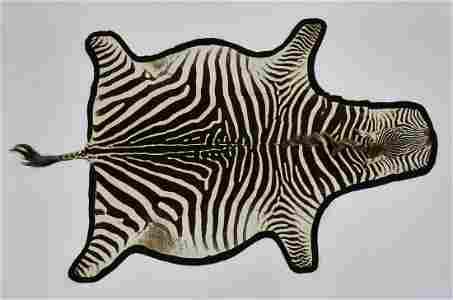 """Vintage full zebra hide rug, lined in felt, 124""""l"""