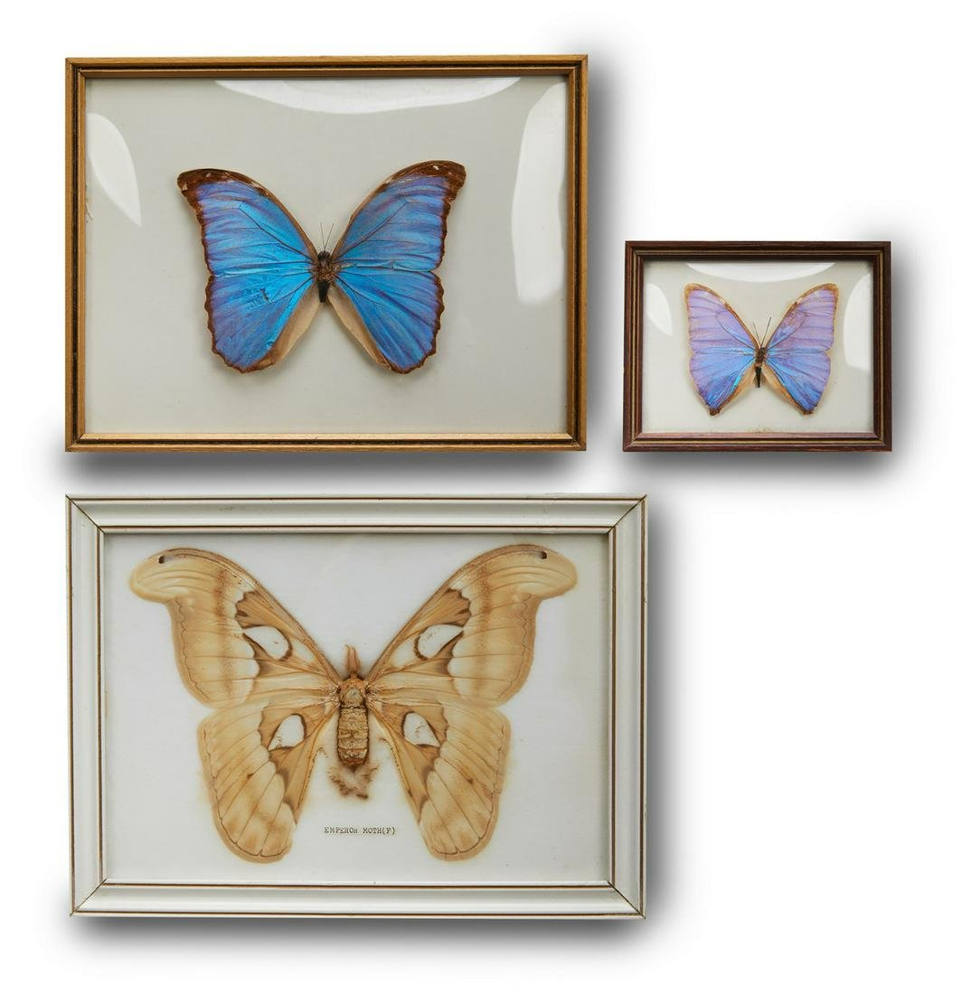 (3) Vintage framed butterfly and moth specimens
