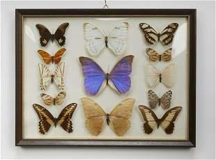 Vintage framed butterfly specimen collection