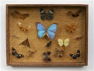 Vintage framed butterfly and moth specimen collection