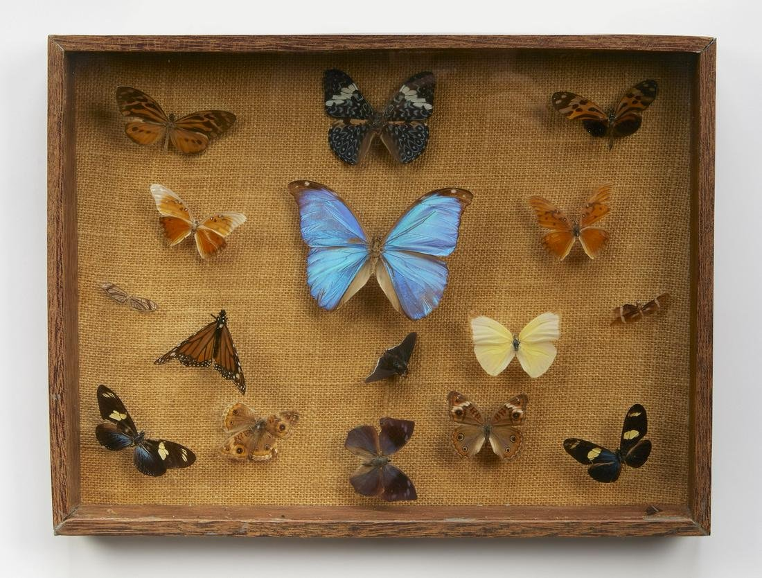 Vintage framed butterfly and moth specimen collection