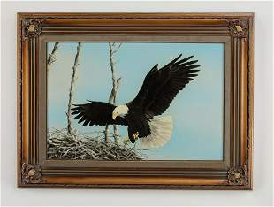 American O/c of a bald eagle landing in treetop nest