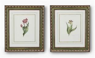 (2) Dora McDaniel signed watercolors of tulips