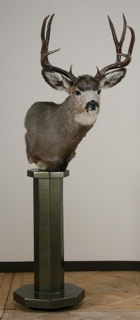 Deer Shoulder Mount On Stand