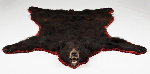 284: Vintage brown bear skin rug - 2