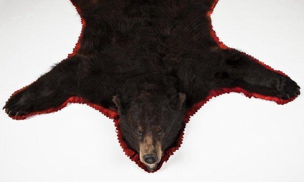 284: Vintage brown bear skin rug - 3