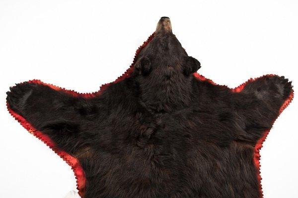 284: Vintage brown bear skin rug - 4