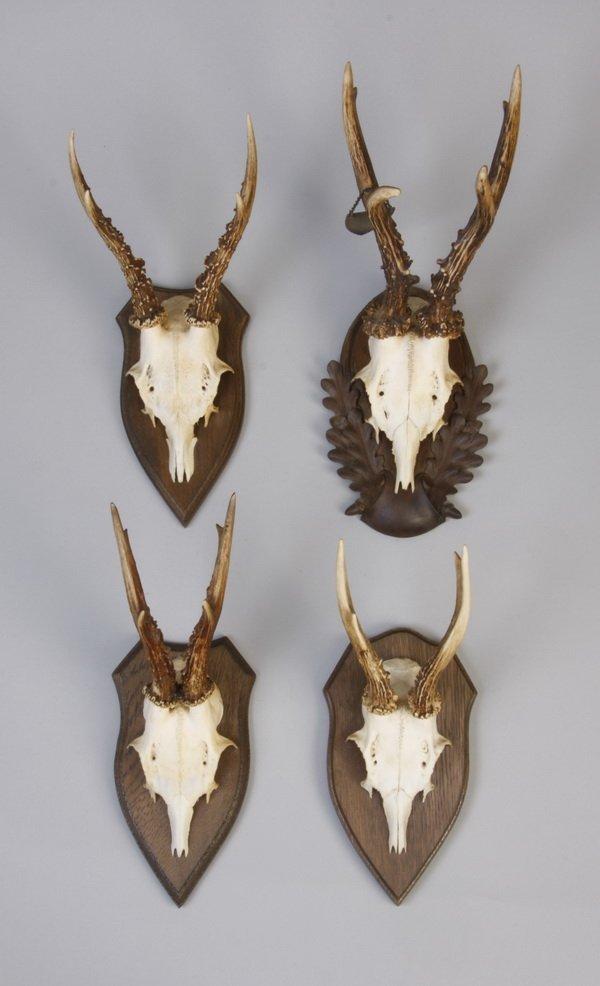 2: (4) Vintage roe buck antler mounts