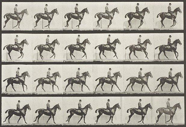 1007: Eadward Muybridge, ›Animal Locomotion‹
