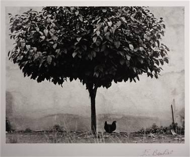 ÉDOUARD BOUBAT (1923–1999) 'La poule e l'arbre', France