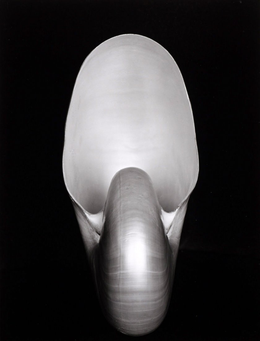 EDWARD WESTON (1886–1958) 'Nautilus Shell', 1927