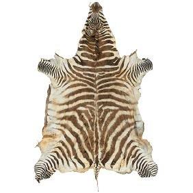 Burchell's Zebra rug Africa, 1960s, unlined hide