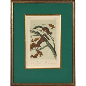 After John James Audubon (1785-1851), five hand-colored