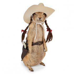 Taxidermy prairie dog, full body mount with accessories