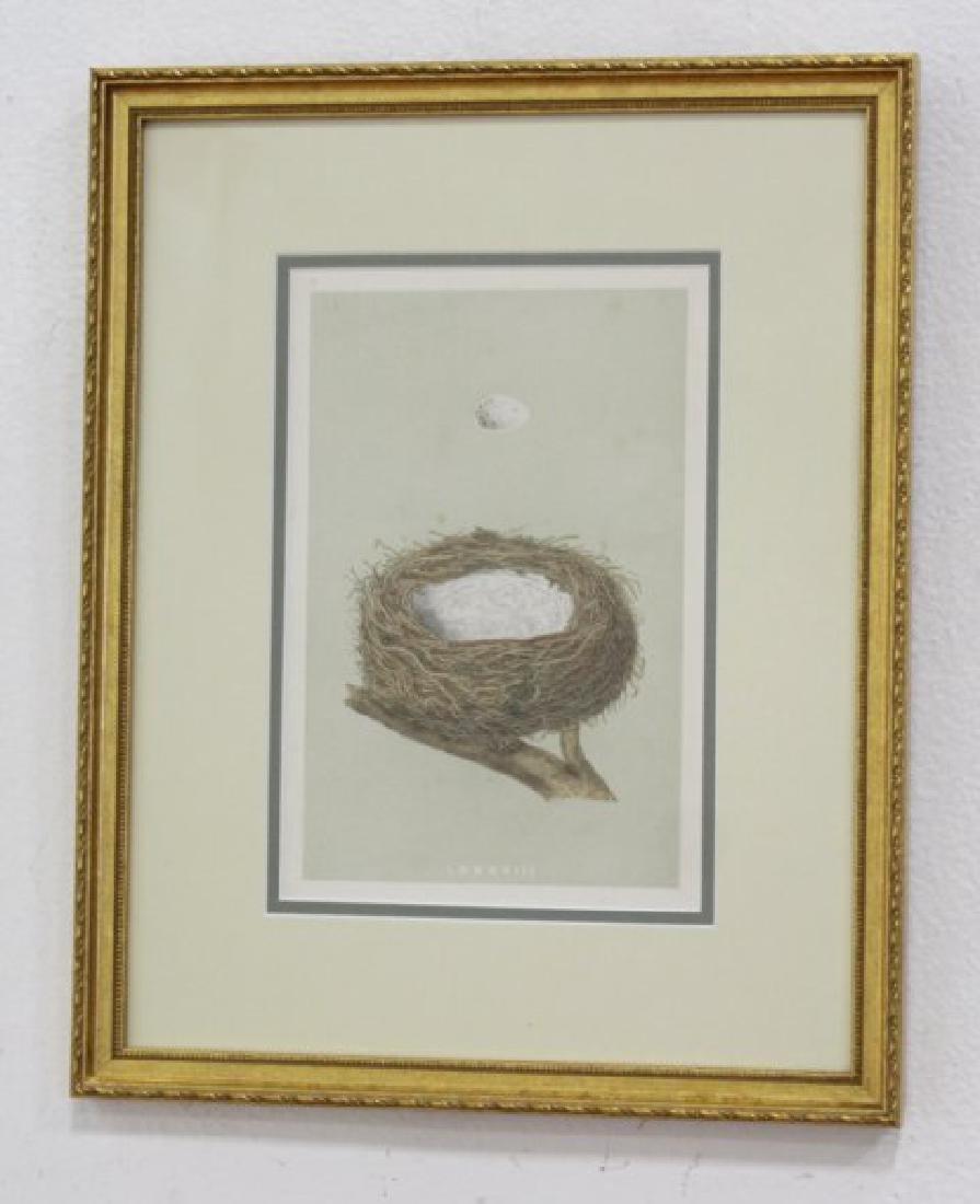 Set 8 Birds Nests Colored Prints - 2