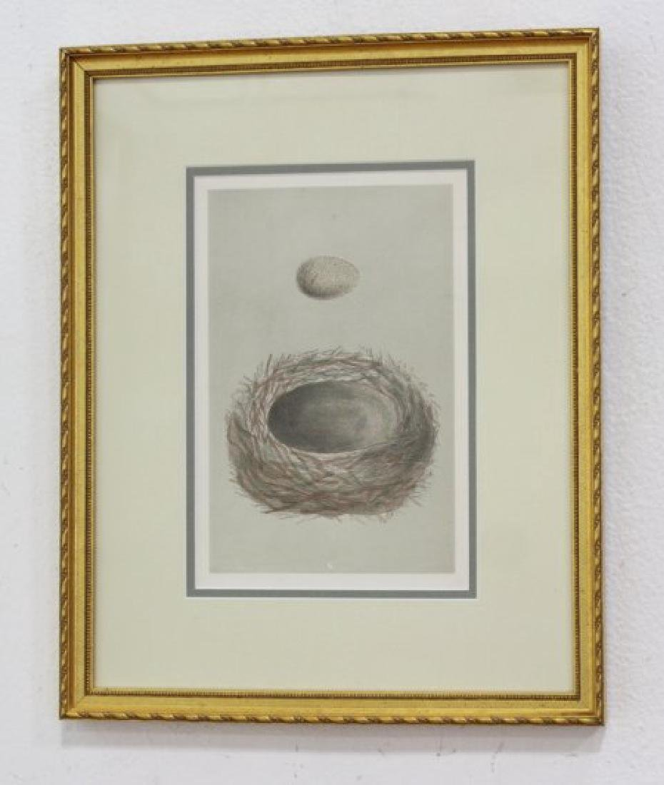 Set 8 Birds Nests Colored Prints - 3