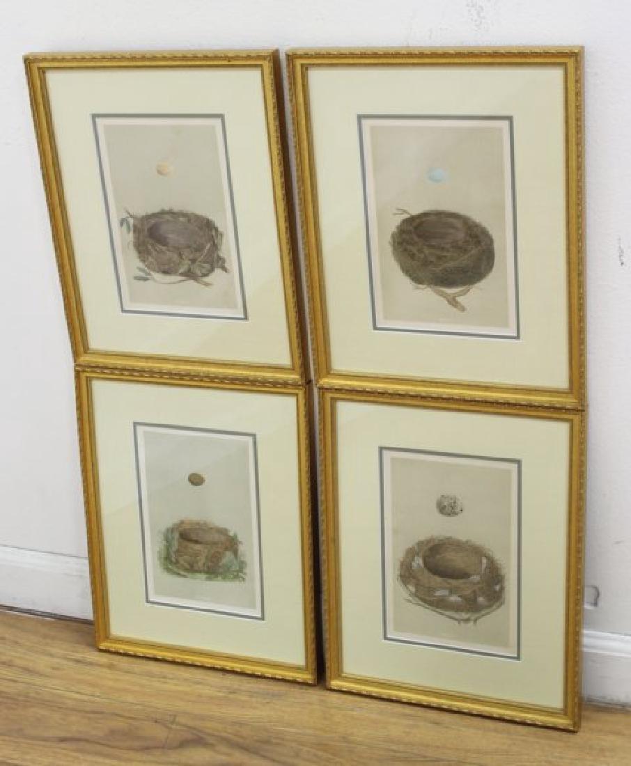 Set 8 Birds Nests Colored Prints - 4