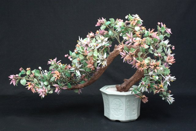 20: Chinese jade tree