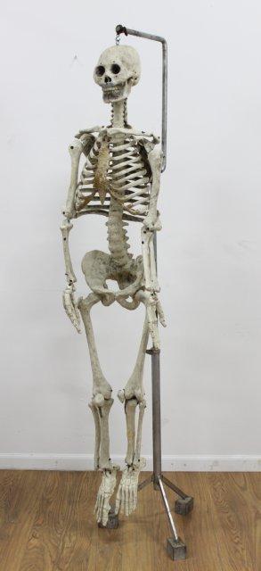 Doctor's Papier Mache Model of Human Skeleton