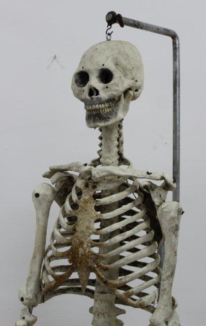Doctor's Papier Mache Model of Human Skeleton - 2