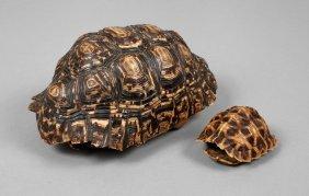 Zwei Schildkrötenpanzer