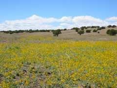 6: AZ LAND, SHOW LOW AREA, 1 AC, $190.75/mo