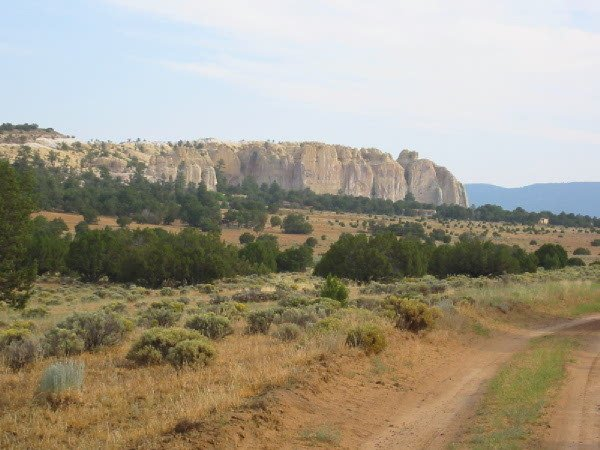 NEW MEXICO LAND CIBOLA CO  2.5 AC TREES